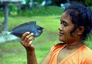 hva slags fisk er nemo